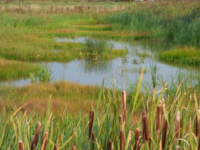 Benieuwd naar de flora en fauna van Park Lingezegen?