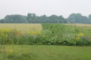 Nieuwe fietsroute bloemrijke gras- en akkerranden